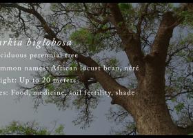 EatWell Africa