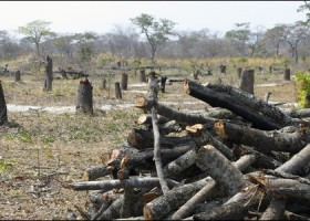 Alternative charcoal production in Africa