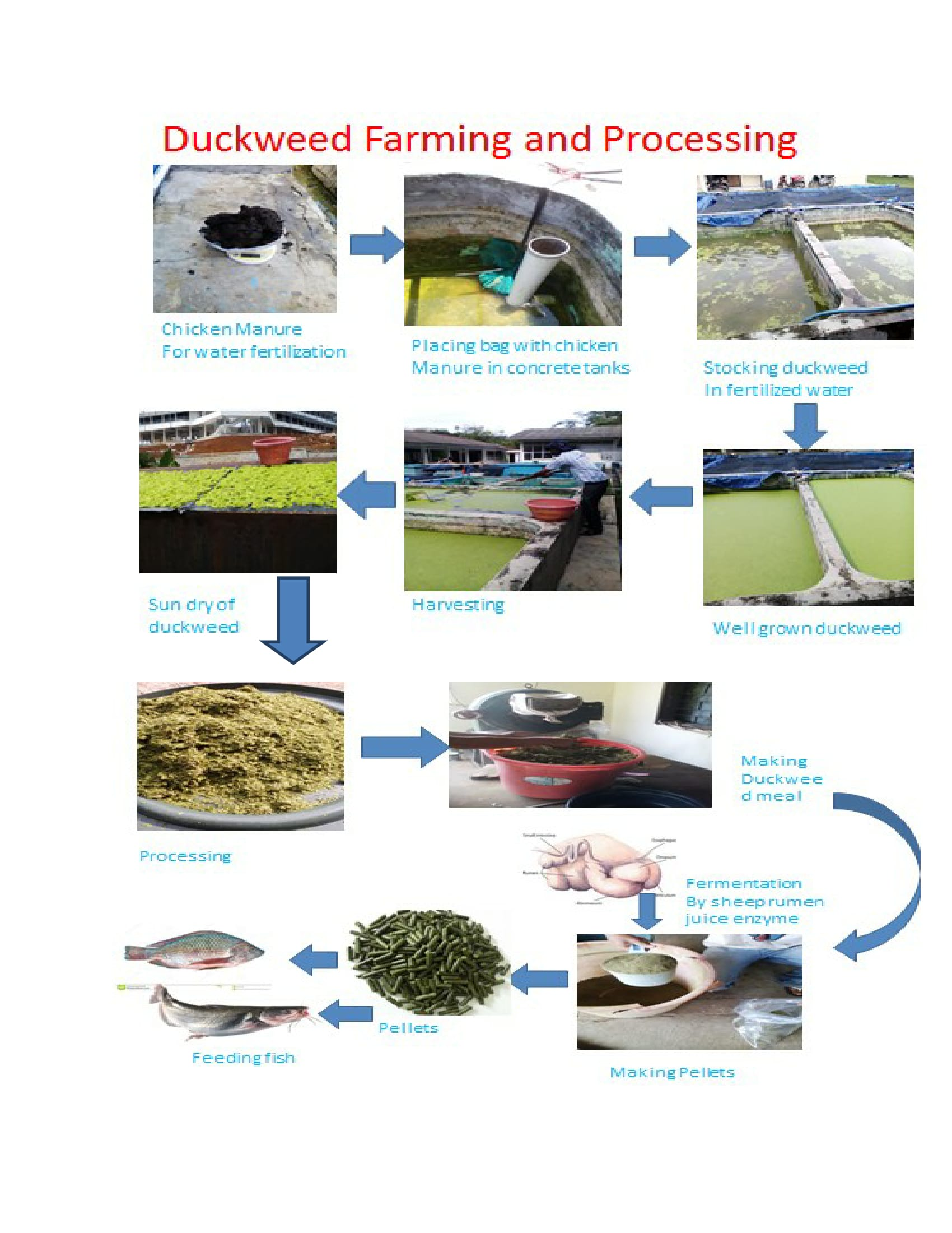 /srv/www/vhosts/user3101/html/entrepreneurship-campus.org/wp-content/uploads/2017/03/Farming-and-processing-of-duckweed..jpg