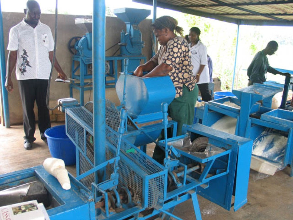 agriculture cassava farming and processing as a means for food