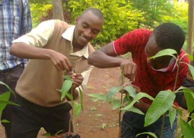 Engaging Kenyan youths in Agribusiness