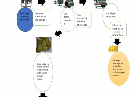 MORINGA OIL AND ANIMAL FEED PRODUCTION