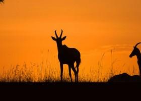 Big Data wildlife tracking system