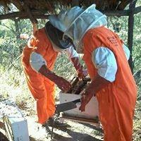 Beekeeping in Botswana